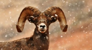 30 Photographs of Wildlife in Utah that will Drop Your Jaw