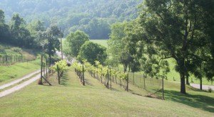 These 12 Beautiful Wineries And Vineyards In West Virginia Are a Must-Visit For Everyone
