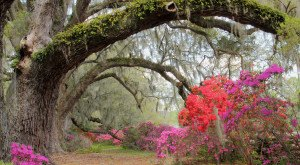 Here Are The 13 Most Beautiful Gardens You'll Ever See In South Carolina