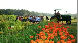 10 Louisiana Farms That Will Make You Miss The Country