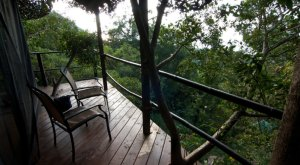These 4 Treehouses In Hawaii Will Give You An Unforgettable Experience