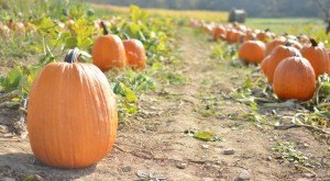 Don't Miss These 10 Great Pumpkin Patches In Pennsylvania This Fall