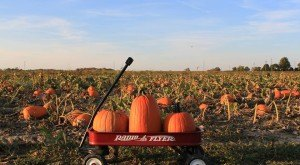 Don't Miss These 15 Great Pumpkin Patches In Indiana This Fall