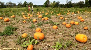 Don't Miss These 10 Great Pumpkin Patches In Ohio This Fall