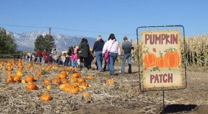 Don't Miss These 10 Great Pumpkin Patches In Nevada This Fall Season