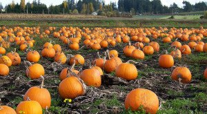 15 Undeniable Signs That Fall Is Almost Here In Pennsylvania