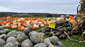 You Must Visit These 12 Awesome Places In Michigan This Fall