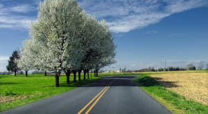Take These 11 Country Roads In Pennsylvania For An Unforgettable Scenic Drive