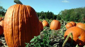 Don't Miss These 10 Great Pumpkin Patches In Alabama This Fall Season