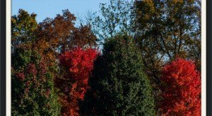 10 Undeniable Signs That Fall Is Almost Here In Kentucky