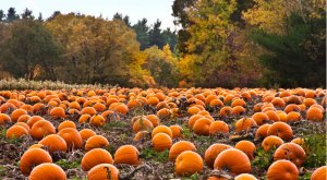 12 Reasons Why Fall Is The Best Season In Iowa