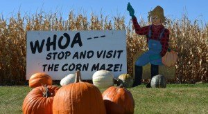 10 Places In Iowa Where You Can Pick Your Own Delicious Food