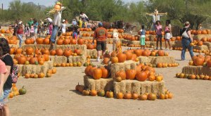 Don't Miss These 10 Great Pumpkin Patches In Arizona This Fall