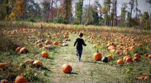 Don't Miss These 12 Great Pumpkin Patches In New Jersey This Fall