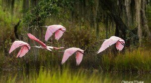 What These 25 South Carolinian Photographers Captured Will Blow You Away
