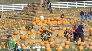 Don't Miss These 8 Great Pumpkin Patches In Oregon This Fall
