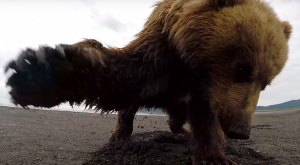 This Explains Why Everyone In Alaska Has A GoPro