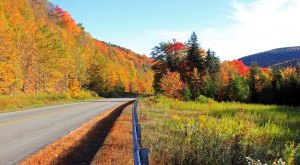 Take These 8 Country Roads In West Virginia For An Unforgettable Scenic Drive