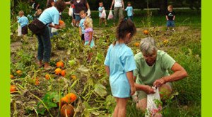 Don't Miss These 19 Great Pumpkin Patches In Nebraska This Fall