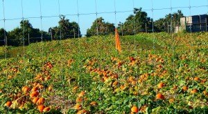 Don't Miss These 9 Great Pumpkin Patches In West Virginia This Fall