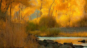 You Absolutely Must Visit These 10 Awesome Places In Nevada This Fall Season