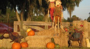 Don't Miss These 9 Great Pumpkin Patches In Florida This Fall