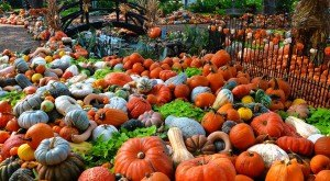 Don't Miss These 10 Great Pumpkin Patches In Texas This Fall