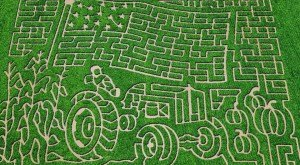 8 Awesome Corn Mazes In Arizona You Have To Do This Fall
