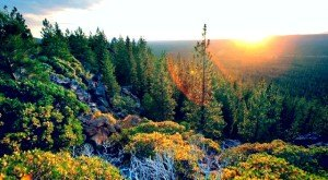 You'll Be Blown Away By These 6 Amazing State Forests In Oregon