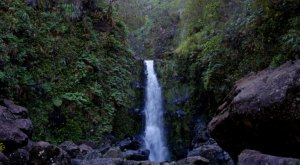 You'll Be Blown Away By These 12 Amazing Forest Reserves In Hawaii