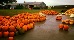 Don't Miss These 19 Great Pumpkin Patches In Missouri This Fall