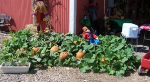 Don't Miss These 10 Great Arkansas Pumpkin Patches This Fall