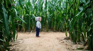 7 Awesome Corn Mazes In Arkansas You Have To Do This Fall