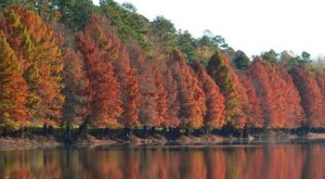 The Fall Foliage At These 8 State Parks In Nebraska Is Stunningly Beautiful