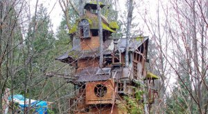 This Forgotten Treehouse In Washington Is Possibly The Best Thing Ever