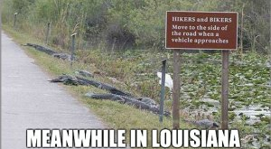 Here Are 12 Jokes About Louisiana That Are Actually Funny