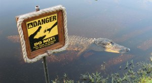 15 Jaw-Dropping Facts About Alligators Everyone In Florida Should Know