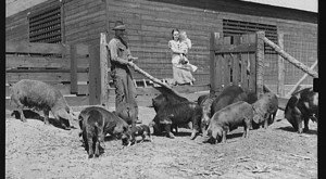 There's Something Special About These 13 Alabama Farms From The Past