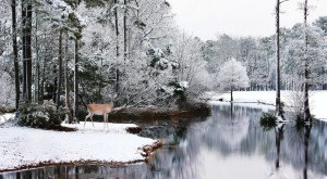 15 Times Snow Transformed North Carolina Into The Most Gorgeous Scenery