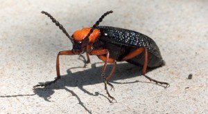 These 9 Bugs Found In Texas Will Send Shivers Down Your Spine