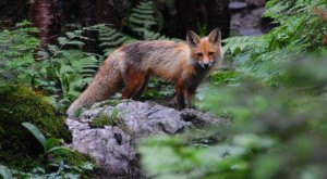 13 Pictures of Wildlife in New Hampshire That Will drop Your Jaw