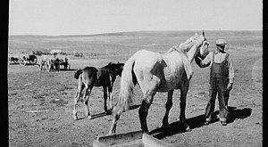 10 Rare Photos Taken In North Dakota During The Great Depression