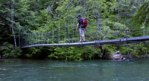 Enjoy Scenic Views While Hiking The Grove of the Patriarchs Trail In Washington