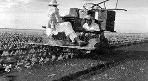 There's Something Special About These 25 Florida Farms From The Past