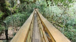 This Swinging Bridge In Florida Will Make Your Stomach Drop
