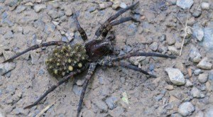 These 14 Bugs Found In Maryland Will Send Shivers Down Your Spine