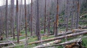 This Bizarre Natural Phenomenon In Arizona Is Both Mesmerizing And Terrifying