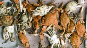 These 10 Photos Show Maryland's Blue Crab Industry Like You've Never Seen It Before
