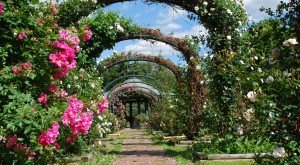 Here Are The 11 Most Beautiful Gardens You'll Ever See In New York