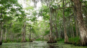 9 Epic Hiking Spots Around New Orleans Are Completely Out of This World